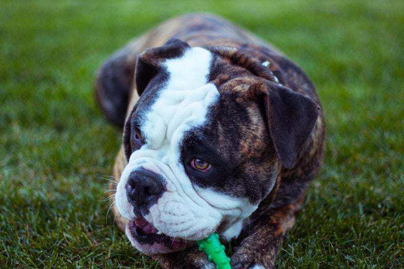 Cuida de su salud divirtiéndote - Los mejores juegos de inteligencia para perros