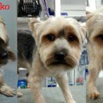 peluqueria canina santander