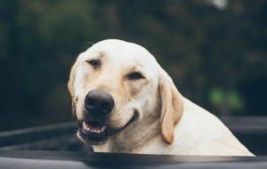 Limpieza dental de perros – cómo puede alargar la vida de tu mascota