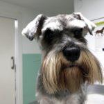 endoscopia perro