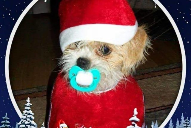 Ya tenemos ganadora del concurso de la foto de Navidad