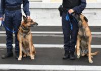 adopcion-perros-policia