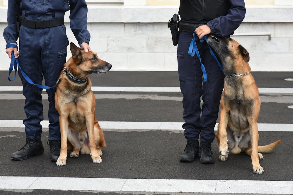 Cuando un héroe se jubila - La importancia de adoptar un perro policía