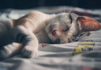 gatos duermen contigo