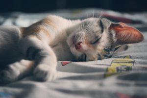 ¿Por qué tu gato duerme contigo?