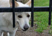 cropofagia caninca