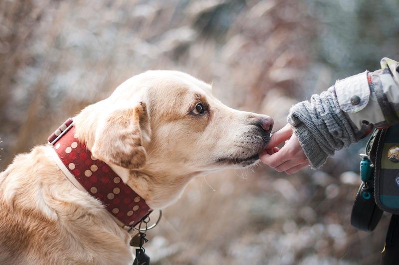 Tratamiento de Cáncer en Perros - Resolvemos tus preguntas más frecuentes