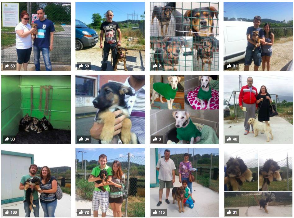 Adopción de perros en Cantabria - 16 refugios y protectoras que luchan a diario por los animales