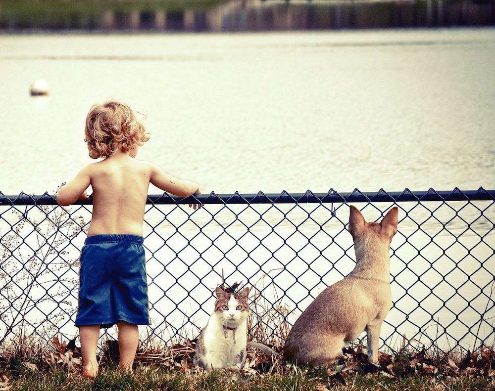 10 cosas que los niños y niñas pueden hacer por los animales