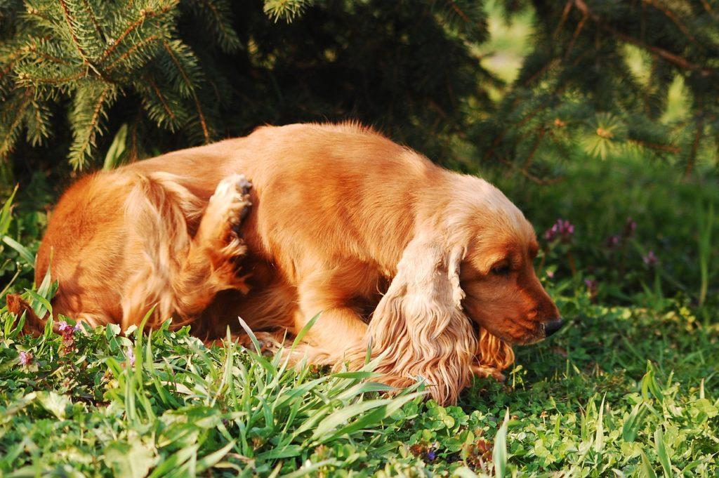 Alergias en mascotas - todo lo que necesitas saber