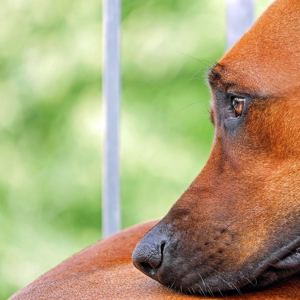 Abril mes contra el maltrato animal
