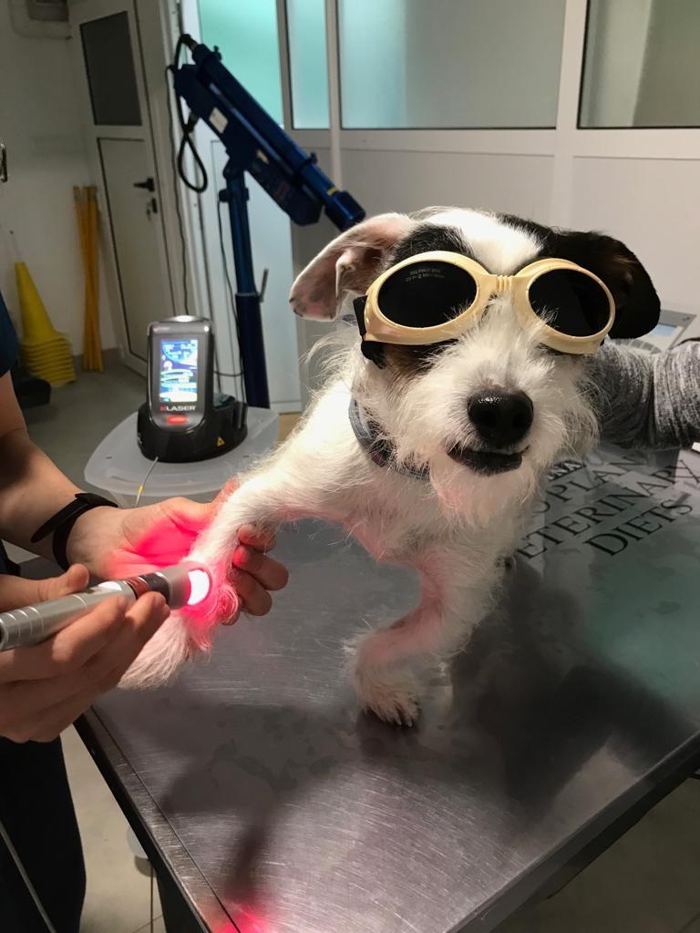 Nuevo láser para el tratamiento de tu mascota