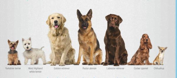 ¿Está tu perro en una situación de riesgo?