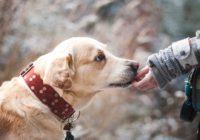 tratamiento cancer en perros