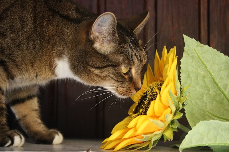 Algunas sustancias que seguro no sabías que eran tóxicas para tu mascota
