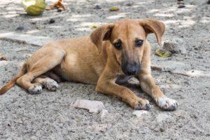 Informe sobre mascotas abandonadas en España